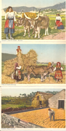 VIANA DO CASTELO(AREOSA)(119)/VIANA DO CASTELO(AREOSA)(124)/CELEIRÓS,BRAGA(140)