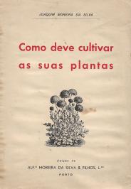 COMO DEVE CULTIVAR AS SUAS PLANTAS
